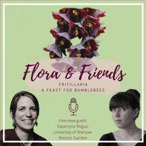 Fritillaria – a feast for bumblebees