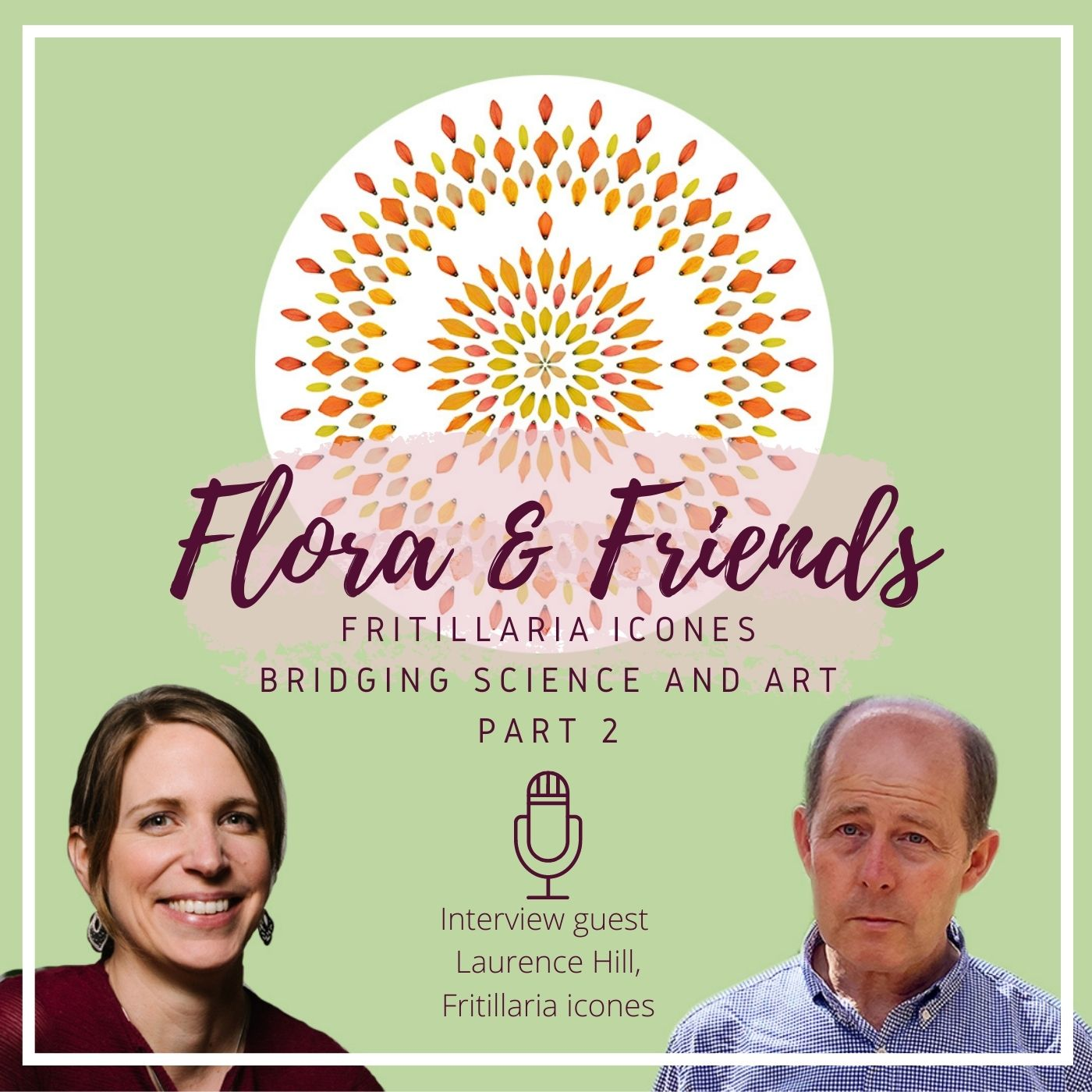 Fritillaria Icones – Botanical storytelling