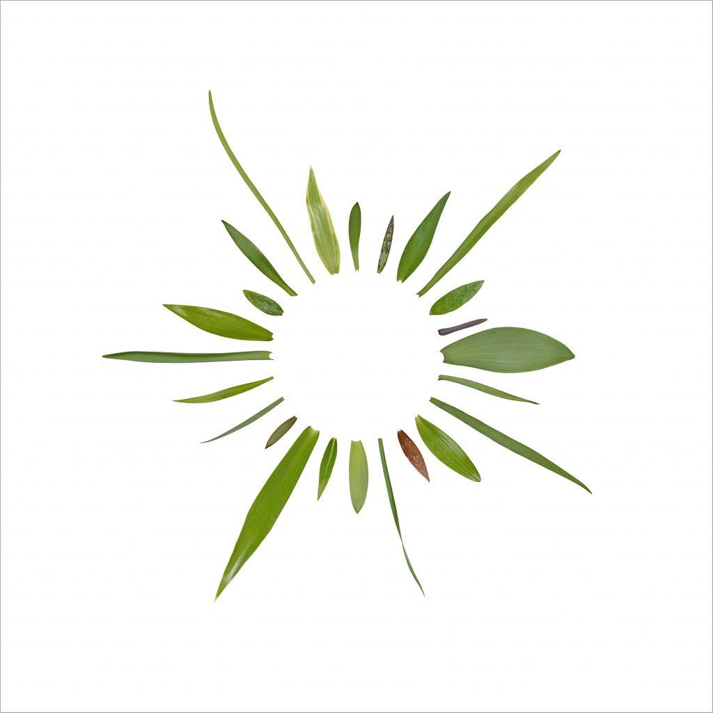 Fritillaria leaf composite
