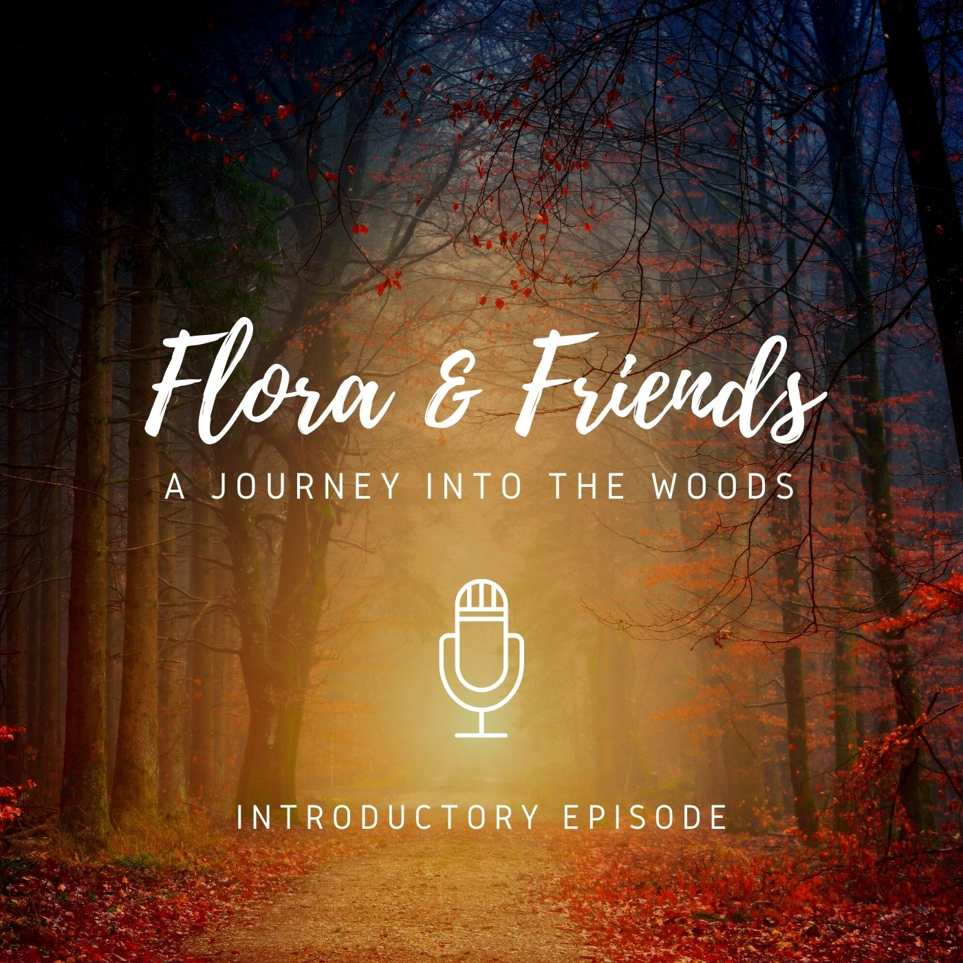 New podcast series – A journey into the woods