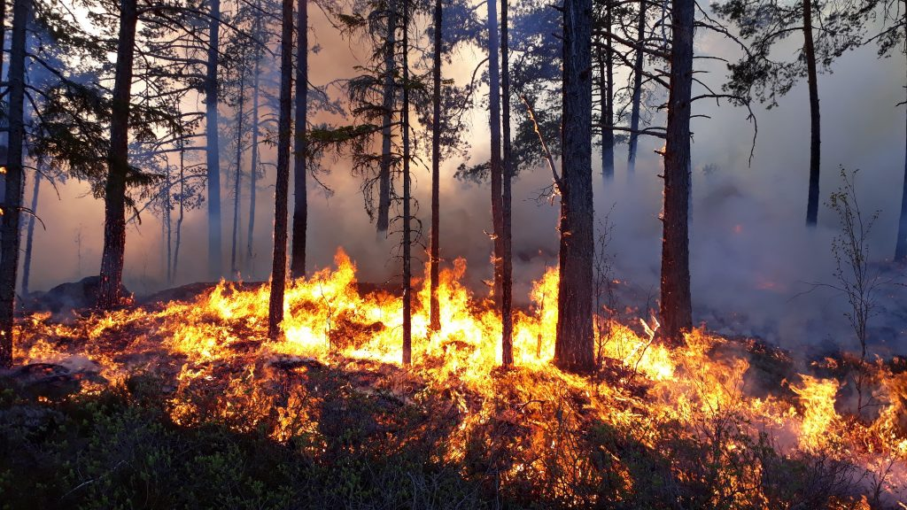 Flames in a forest understory