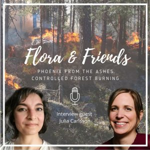 Phoenix from the Ashes – Controlled forest burning