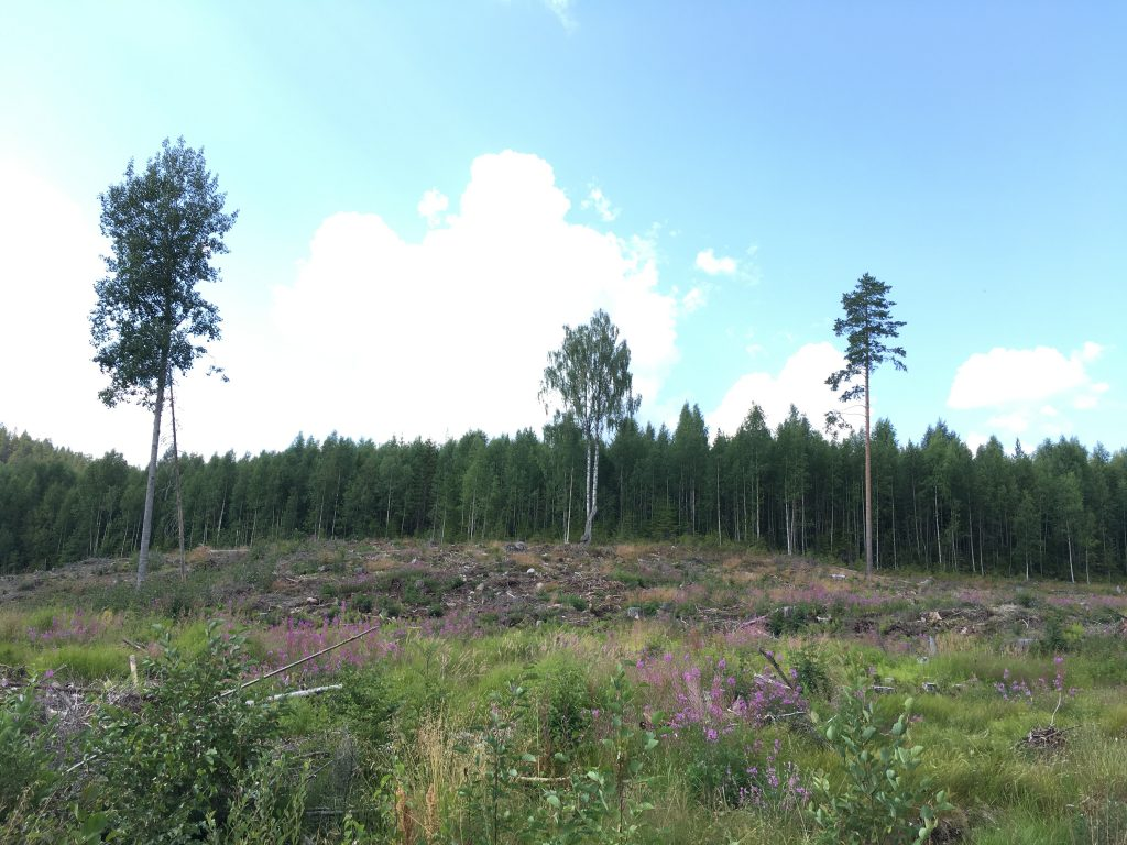 A clearcut in the forest with 3 retention trees